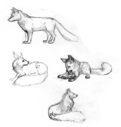 foxsketches
